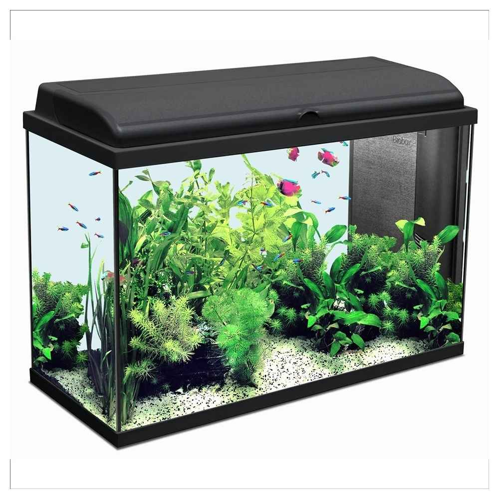 aquarium 80 litres pas cher 28 images aquarium de 80. Black Bedroom Furniture Sets. Home Design Ideas