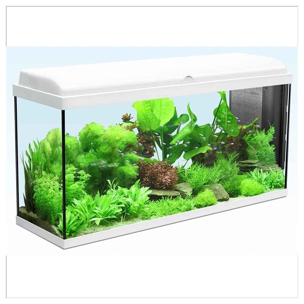 aquarium d 39 eau froide guide d 39 achat. Black Bedroom Furniture Sets. Home Design Ideas