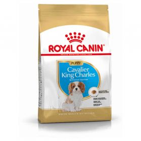 Royal Canin - Croquettes Cavalier King Charles Junior pour Chiot - 1,5Kg