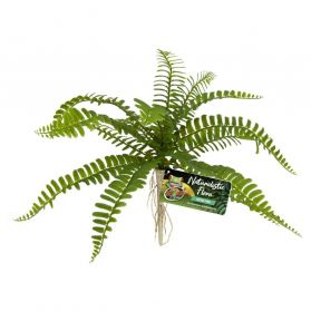 Zoomed - Plante Artificielle Sword Fern pour Terrarium