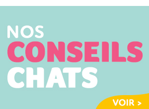 conseils chats