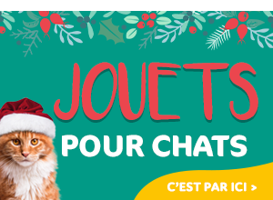 jouets chat