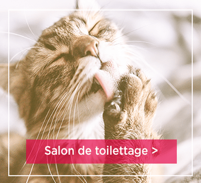 Salons de toilettage